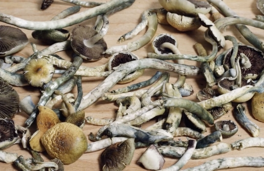 Why Doctors Want to Reclassify Psilocybin, the Drug That Puts the 'Magic' in Mushrooms
