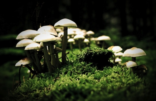 Quality of Acute Psychedelic Experience Predicts Therapeutic Efficacy of Psilocybin for Treatment-Resistant Depression
